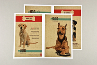 Dog Walking Brochure with Textured Background Template